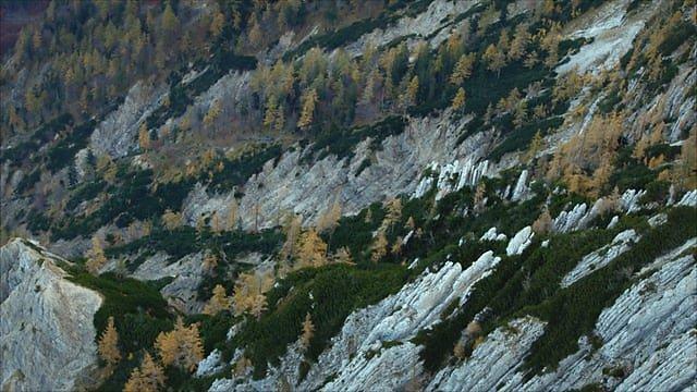 Trailer Making an Ancient Forest Kalkalpen National Park
